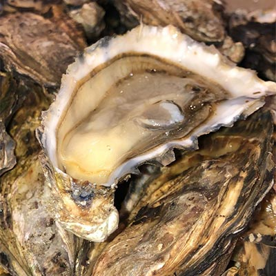 Gigas Oysters salted & iodized from Brittany