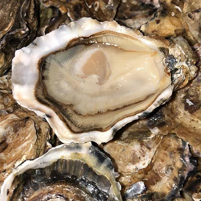 Gigas Oysters fat & sweet from Marennes Oléron